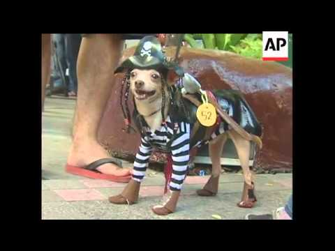 Pet owners in the Filipino capital of Manila added their own twist to Halloween on Sunday by dressin