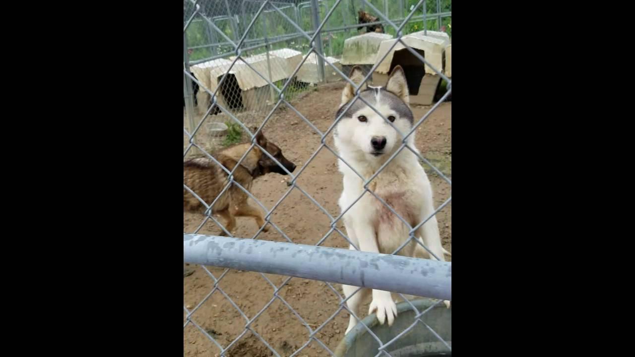 Mount eden ky puppy mill Kentucky 5/20/16