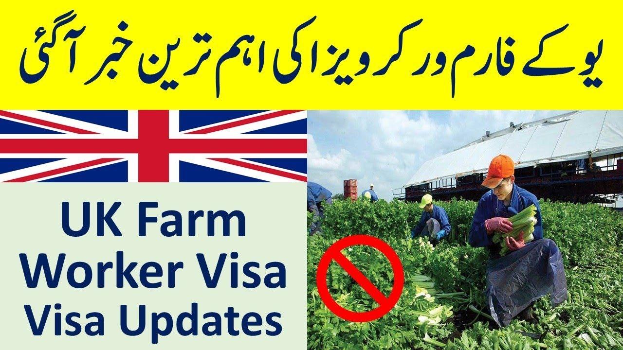 UK Farm Worker Visa Under Seasonal Agriculture Worker Scheme