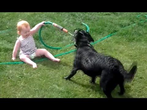Perros felices & Bebés Jugando con la manguera de agua - más feliz del vídeo nunca!