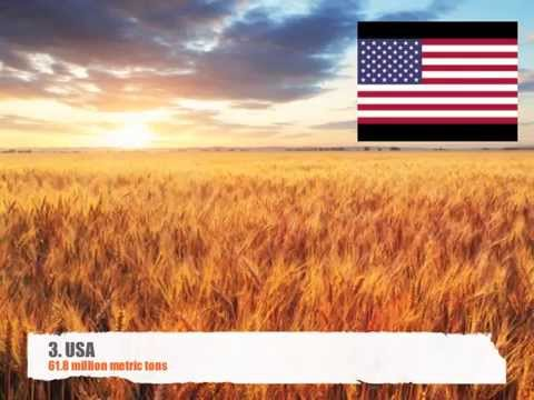 Top 10 wheat producing countries