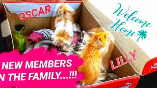 Welcoming The New Members of Our Family!!! (SURPRISE) | CUTEST PETS EVERRRR.....!!!