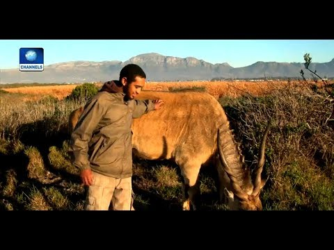 South African Project Aims To Restore Biodiversity In Cape Flat |Eco@Africa|