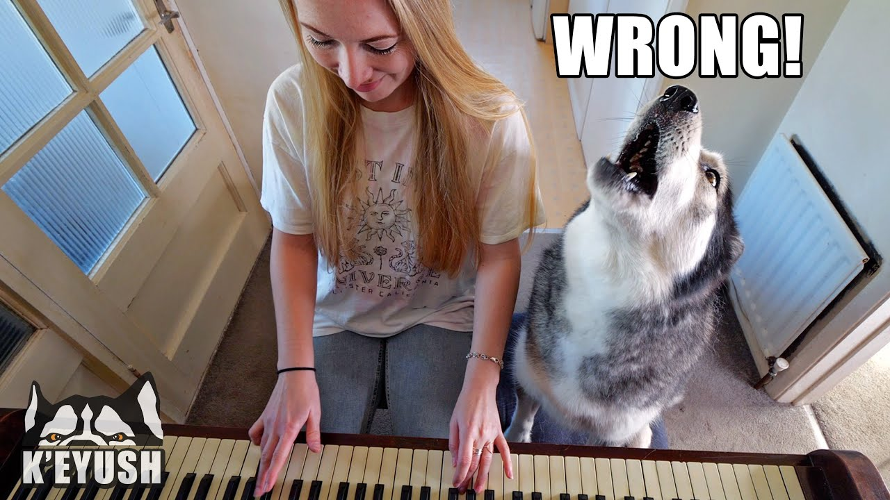 Teaching My Husky To Play Piano! He SMACKS Me!