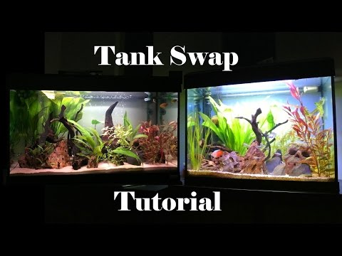 How To Swap A Fish Tank Or Replace Substrate, Everything You Need To Know