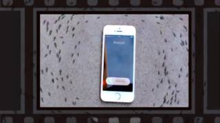 Ants Circling My Phone  - iphone ant control