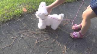 Мой интерактивный щенок Go-Go Hasbro!! Гуляем на улице!