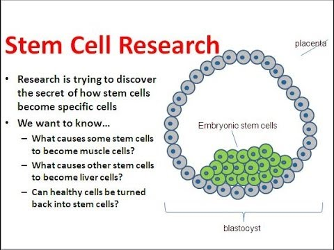 what is stem cell research