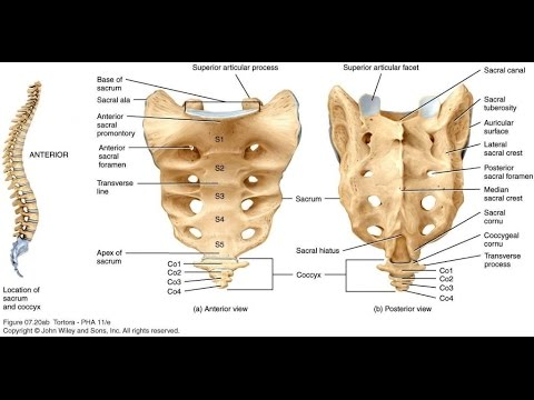 SACRUM AND COCCYX AP/LAT, ANATOMY AND PHYSIOLOGY PART - 16. - YouTube