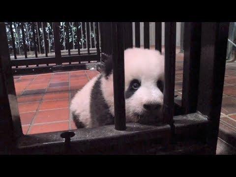 Tokyo-born panda cub born finally gets a name