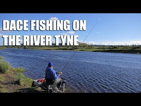 Dace Fishing On The River Tyne