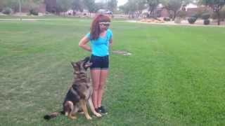 Protection Dogs Scottsdale Az