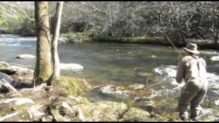 Video Fly Fishing Report for the Smoky Mountains, Early March 2011