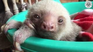 Rocking Chair Sloths!