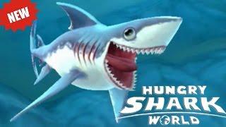 видео Атлантическая сельдевая акула
