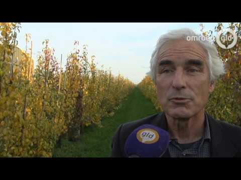 Teelt van appels en peren slecht voor het milieu; bodem vol pesticiden