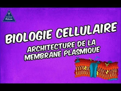 01 - Architecture de la membrane plasmique (Livres cf description)