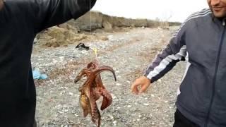 РЫБАЛКА В ГРЕЦИИ. FISHING IN GREECE(, 2015-12-13T12:23:26.000Z)