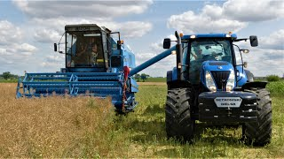 Żniwa Rzepakowe 2019 ☆ Bizon Z058 Rekord ☆ New Holland T7030