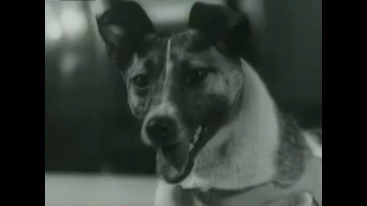 Łajka. Tragiczna historia kosmicznego psa