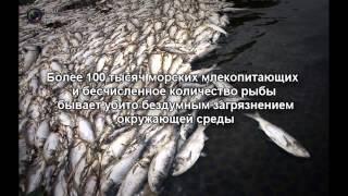 ВИДЕОФРАГМЕНТ 1 Загрязнение воды    Water pollution(, 2015-04-30T10:42:21.000Z)