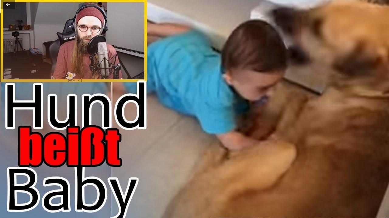Hundehaftpflicht Hundehaftpflicht Versicherung Vergleich Und