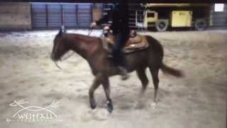 Do horses get dizzy when they are learning to spin?