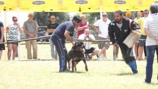 Dumas Delle Nuove Corti  Hda Ed Bl  Ztp Rottweiler Del 21 06 2014 - Video Niferre