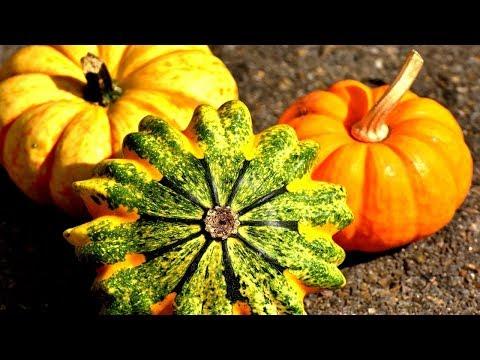 Pumpkin A Superfood / Recipe
