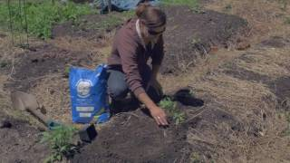 New American Gardening Videos (French) Basic Tips for Gardening