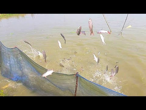 Awesome Flying Fish | Flying Fish In The Pond-Watch Out Fish Live