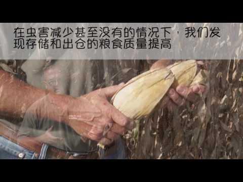 Why U.S. Grain Farmers Use GMOs - Chinese Subtitles