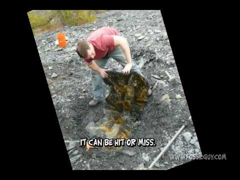 Fossil Fern Plate Extraction