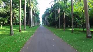 Royal Botanical Garden, Peradeniya, Most Visited Places in  Sri Lanka