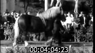 Лошади-чемпионы ВСХВ 1954 года.
