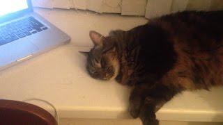 猫専用リラックスミュージック、効果の程は猫の顔から