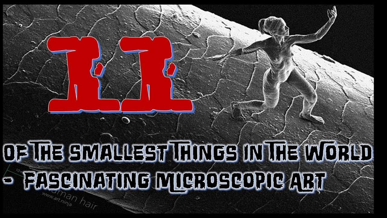 11 Of The Smallest Things In The World - Fascinating Microscopic ...