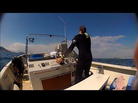 Marseille: les récifs artificiels de la zone marine protégée