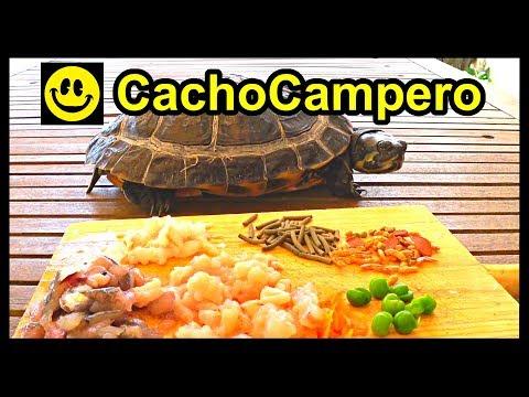 8 Alimentos que le encantarán a tu tortuga de agua y cómo dosificar la dieta o comida de tu tortuga