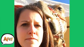 She's About to REGRET EVERYTHING! 😂🐪 | Funny Videos | AFV 2020