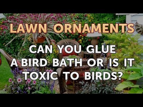 Can You Glue A Bird Bath Or Is It Toxic To Birds?