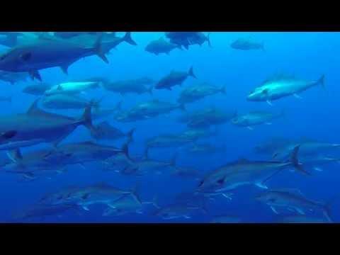 Azores - Pico Island - HD 1080p