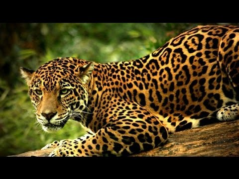 documentaire animalier bbc