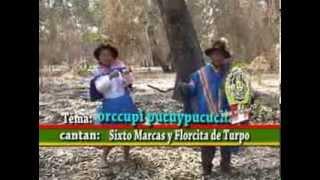 FLORCITA DE TURPO TORIL TEMA ORCCOPI CCASAPI
