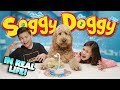default - Soggy Doggy Board Game