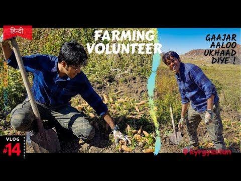Kyrgyzstan: Village Life | Free Volunteering At Farm, BUT...