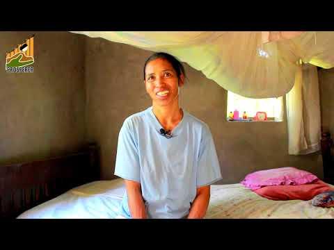TSITOHAINA: un instituteur devenu grand producteur de maïs dans la CR Andranomamy, Région Boeny