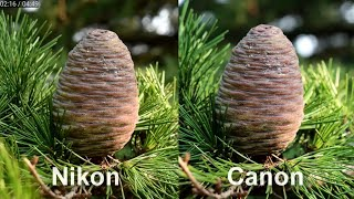 canon 800d vs Nikon d5600.... Photographs