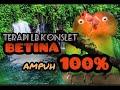 Ampuh Masteran Lb Konslet Betina Speed Lambat  Mp3 - Mp4 Download