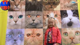 ✔ Выставка Кошечек. Ярослава в гостях у Котят | Kitty and Girl Yaroslava. Exhibition of kitties ✔